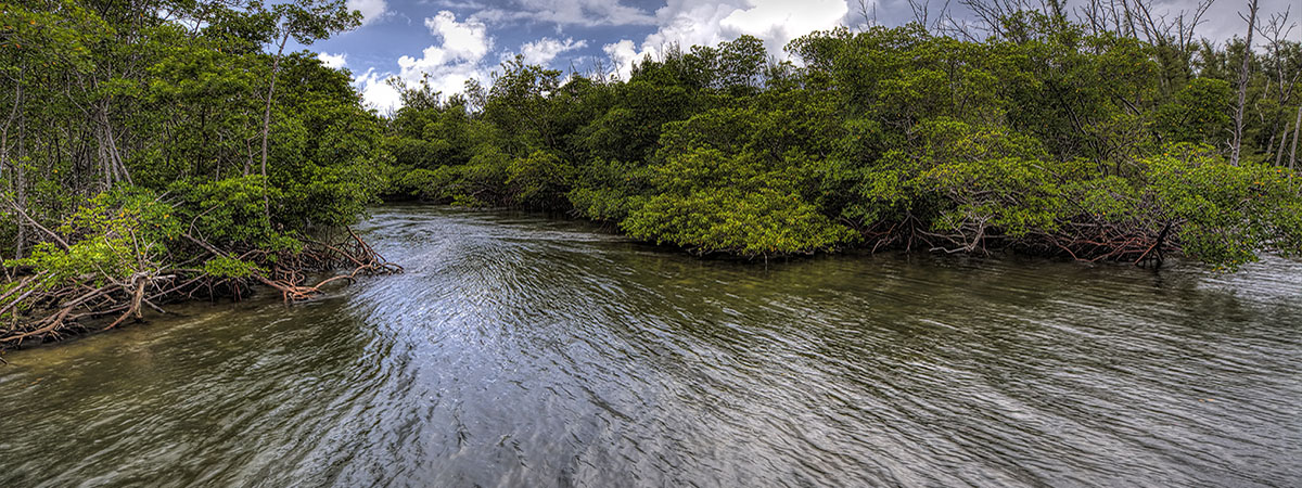 The beautiful shallow water mangroves